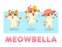 Meowbella Female Cat Royalty Free Stock Images