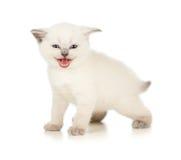 Γατάκι Meowing Στοκ φωτογραφία με δικαίωμα ελεύθερης χρήσης