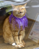Meowing Cat in Sequins Royalty Free Stock Photography