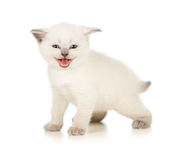 Meowing kitten. Isolated on white Royalty Free Stock Photography