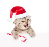 Meowing kitten in red santa hat  with Christmas candy cane looki Stock Image