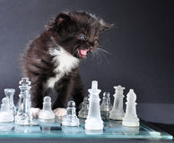 Meowng kitten on glass chessboard with  pieces Royalty Free Stock Photography