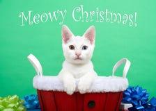 Meowy与虹膜异色症的圣诞节小猫 免版税库存图片