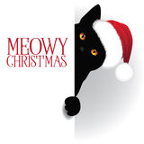 Meowy Christmas peeking cat background Royalty Free Stock Photo