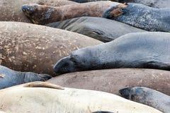 Mer-Éléphants Photographie stock