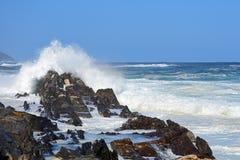 Mer agitée et hautes vagues, rivière du ` s de tempête, Tsitsikamma, Afrique du Sud image libre de droits