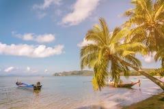 Mer, arbres de ciel et de noix de coco sur la plage, ciel bleu et mer Photo libre de droits