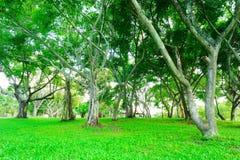 Mer av trädet och trädfilialer är parklanden Arkivbilder