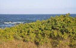 Mer baltique, Lithuanie Image libre de droits