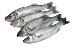 mer basse de poissons Images stock