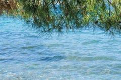Mer bleue avec des feuilles de pin pour le fond Images stock