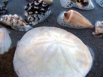 Mer-coquilles 1 Photographie stock libre de droits