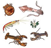 Mer creatures-5 de vecteur illustration de vecteur