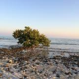 Mer, désert, Abu Dhabi, EAU, Dubaï Photos libres de droits