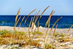 Mer d'été Image stock