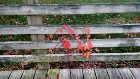 Mer d'Autumn Leaves Photo stock
