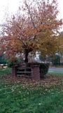 Mer d'Autumn Leaves Photos libres de droits