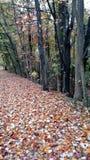 Mer d'Autumn Leaves Photographie stock libre de droits