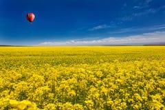Mer d'or des fleurs Photos libres de droits