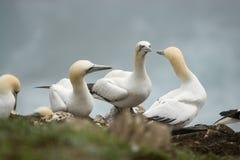 mer d'oiseaux Photographie stock