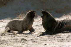 mer de 3 lions Photographie stock libre de droits