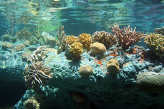 Mer de corail Photographie stock libre de droits