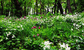 Mer de fleur dans la forêt Images stock