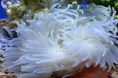 mer de jardin dessous Photographie stock