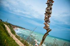 Mer de la Bulgarie de plage de Shabla Karya de panorama de coquilles Photos stock