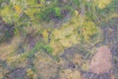 Mer de mauvaise herbe Photographie stock libre de droits