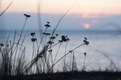 Mer de paysage de soirée Photo stock