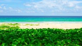 Mer de plage de Phuket Tha?lande de c?te ouest belle en ?t? Sun 4K, clip vid?o d'UHD clips vidéos