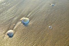 Mer de Shell sur la plage de sable photographie stock libre de droits