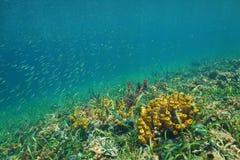 Mer des Caraïbes de fond de la mer coloré de poissons d'espèce marine Images libres de droits
