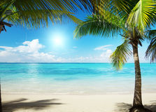 Mer des Caraïbes et paumes