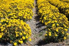 Mer des fleurs Photographie stock