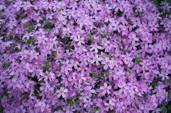 Mer des fleurs Photographie stock libre de droits