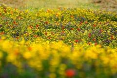 Mer des fleurs Images libres de droits