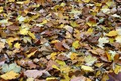 Mer des lames diverses d'automne Photos stock