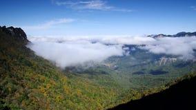 Mer des nuages dans la forêt de Hubei Shennongjia clips vidéos