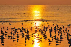 Mer des oiseaux Photo libre de droits