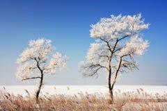 Mer du Japon en hiver 8 Images stock