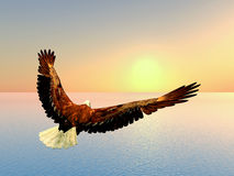 Mer Eagle illustration de vecteur