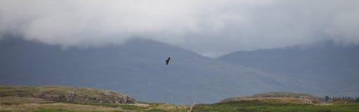 Mer Eagle Photo libre de droits