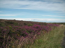 Mer et ciel d'Exmoor Royaume-Uni Photographie stock libre de droits
