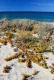 Mer et falaise 13 Photos libres de droits
