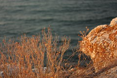 Mer et herbe dans le coucher du soleil d'or image libre de droits