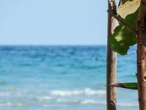 Mer et les arbres verts Photographie stock libre de droits