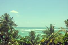 Mer et palmiers un ciel bleu clair Photo stock