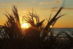 Mer et paumes de Sun Photo libre de droits